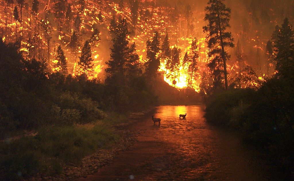 montanawildfires