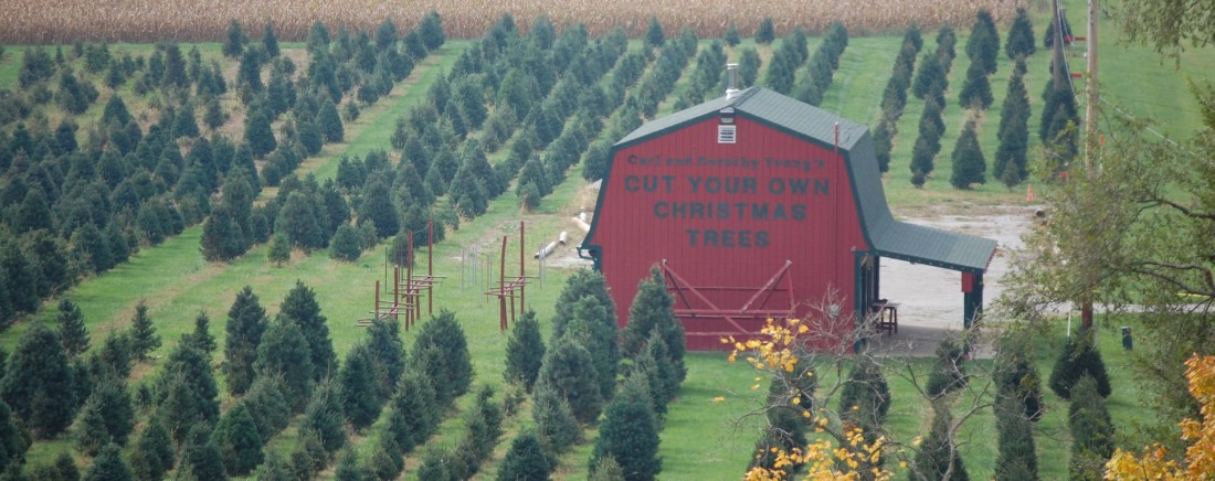 Carl-and-Dorothy-Christmas-Tree-Farm